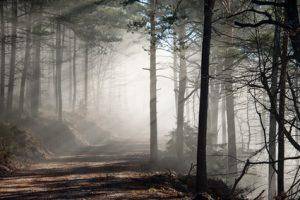 Lichtdurchfluteter Nebelwald im Sptherbst